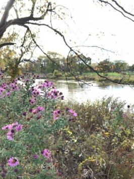 Humboldt Park Chicago